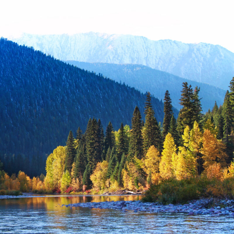 Fall colors and snow on Flathead River Flathead National Forest Montana 15