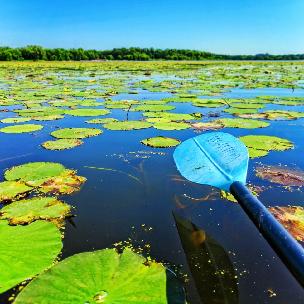 Lilypads while kayaking with Wingra Boats Madison Wisconsin 1